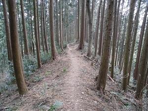 16天覚山尾根道.jpg