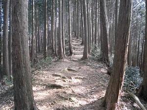 20尾根道登り.jpg