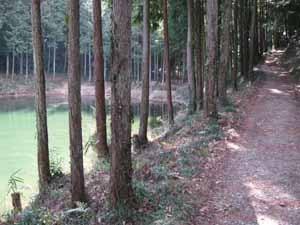 8池脇山道.jpg