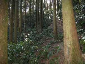 9ジグザグ山道.jpg